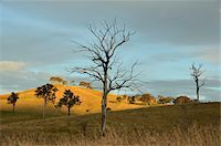 Countryside near Dungog, New South Wales, Australia Stock Photo - Premium Rights-Managednull, Code: 700-03907049