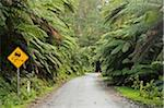 Wet Road Through Rainforest, Tarra-Bulga National Park, Victoria, Australia Stock Photo - Premium Rights-Managed, Artist: Jochen Schlenker, Code: 700-03907622