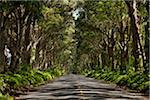 Tunnel of Trees, Kauai, Hawaii, USA Stock Photo - Premium Royalty-Free, Artist: Ed Gifford, Code: 600-03907740