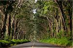 Tunnel of Trees, Kauai, Hawaii, USA Stock Photo - Premium Royalty-Free, Artist: Ed Gifford, Code: 600-03907745