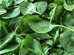 Fresh spinach Stock Photo - Royalty-Free, Artist: victorburnside, Code: 400-03930730