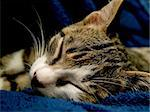 small pussy cat sleeping in the leather chair Stock Photo - Royalty-Free, Artist: igorad, Code: 400-03931665