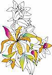 Colorful lilies on white background