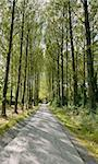 Umberslade an avenue of poplar trees road lane Stock Photo - Royalty-Free, Artist: davidmartyn, Code: 400-03933478