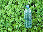 small plastic bottle of clear mineral water in the natural very fresh  green leaves background Stock Photo - Royalty-Free, Artist: yuriz, Code: 400-03934003
