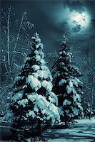 Evergreens at snowy winter forest in the night.  Special toned photo f/x. Stock Photo - Royalty-Freenull, Code: 400-03946605