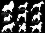 Dogs silhouette to represent different dog breeds Stock Photo - Royalty-Free, Artist: Guilu, Code: 400-03951047