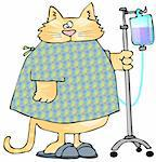 This illustration depicts a cat in a hospital gown pushing a mobile IV stand. Stock Photo - Royalty-Free, Artist: caraman, Code: 400-03952302