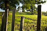 Rustic Countryside Fence in Maidstone England Stock Photo - Royalty-Free, Artist: surpasspro, Code: 400-03952880