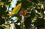 Butterfly on Sweet Chestnut Catkin, Epirus, Greece Stock Photo - Premium Rights-Managed, Artist: Ben Seelt, Code: 700-03958081