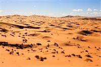 Sand Dunes and Desert Grass,Erg Chebbi, Morocco Stock Photo - Premium Rights-Managednull, Code: 700-03958197