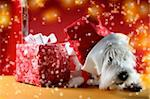Cute white puppy with present and snowflakes. Stock Photo - Royalty-Free, Artist: arosoft, Code: 400-03966519