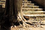 The wise old tree and the granite ancient flight of steps guides you through your life. Follow the path of meditation and reflection Stock Photo - Royalty-Free, Artist: myper, Code: 400-03972583
