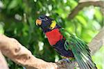 A beautiful rainbow lorikeet perched in a tree. Stock Photo - Royalty-Free, Artist: lisafx, Code: 400-03973110