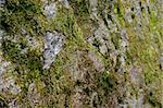 green mossy lichen surrounding a  rock face   Stock Photo - Royalty-Free, Artist: fiftycents, Code: 400-03973677