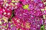 Pink and purple hydrangeas for sale at a farmer's market in summer -- photo suitable for use as a background Stock Photo - Royalty-Free, Artist: karimala, Code: 400-03992623