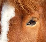 the head of a brown horse, closeup Stock Photo - Royalty-Free, Artist: klagyi, Code: 400-03999464