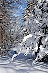 Winter landscape of a sunny forest after a heavy snowfall Stock Photo - Royalty-Free, Artist: Elenathewise, Code: 400-03999799