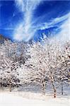 Winter landscape of a sunny forest after a heavy snowfall Stock Photo - Royalty-Free, Artist: Elenathewise, Code: 400-04000940