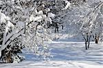 Winter landscape of a sunny park after a heavy snowfall Stock Photo - Royalty-Free, Artist: Elenathewise, Code: 400-04000941