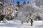 Winter landscape of a sunny park after a heavy snowfall Stock Photo - Royalty-Free, Artist: Elenathewise, Code: 400-04005756