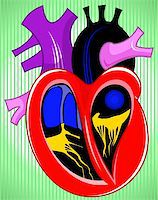 Illustration of heart cross section Stock Photo - Royalty-Freenull, Code: 400-04008699