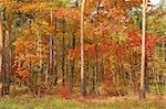 Fall in forest Stock Photo - Royalty-Free, Artist: phodopus, Code: 400-04020029