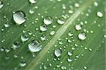 water drops on the leaf (abstract background) Stock Photo - Royalty-Free, Artist: jonnysek, Code: 400-04032247