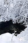 Winter landscape with snow covered trees and river Stock Photo - Royalty-Free, Artist: Elenathewise, Code: 400-04044929