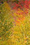 Colorful Leaves in Autumn Season in Vermont Stock Photo - Royalty-Free, Artist: surpasspro, Code: 400-04053567