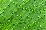 Natural background of green plant leaf with raindrops Stock Photo - Royalty-Free, Artist: Elenathewise, Code: 400-04054932