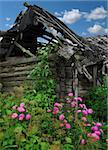 old house -  rose flowerses -  blue sky Stock Photo - Royalty-Free, Artist: photoka, Code: 400-04060827