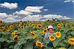 farmer standing in  a sunflower field Stock Photo - Royalty-Free, Artist: Noam, Code: 400-04064854