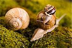 Snail - a slow animal that is covered by a shell. Stock Photo - Royalty-Free, Artist: JanPietruszka, Code: 400-04066304