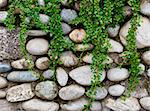rock wall and green plant Stock Photo - Royalty-Free, Artist: tiero, Code: 400-04066461