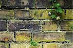 old brick wall with moss cobwebs and a small climbing rose Stock Photo - Royalty-Free, Artist: paulfleet, Code: 400-04066488