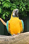 Parrot Bird Waiting for Food in the day Stock Photo - Royalty-Free, Artist: kentoh, Code: 400-04067911