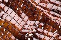 snake skin - Snakeskin texture - leather background Stock Photo - Royalty-Freenull, Code: 400-04068413