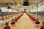 The modern and new automated integrated poultry farm Stock Photo - Royalty-Free, Artist: terex, Code: 400-04082113