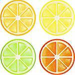 Four citrus, isolated on white, eps 8 fprmat
