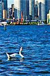 Toronto waterfront with white swans in the harbour Stock Photo - Royalty-Free, Artist: Elenathewise, Code: 400-04093792