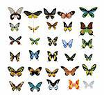many multicolored butterflies on a white background Stock Photo - Royalty-Free, Artist: BooblGum, Code: 400-04105330