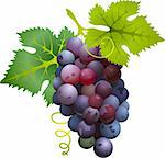 Black grapes Stock Photo - Royalty-Free, Artist: ativka, Code: 400-04117852