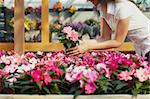 cropped view of woman choosing pink flowers in garden center