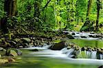 Mountain stream in a tropical rain forest. Stock Photo - Royalty-Free, Artist: GoodOlga, Code: 400-04121889