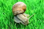 Snail with shell on green background Stock Photo - Royalty-Free, Artist: Colour59, Code: 400-04123165
