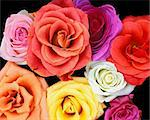 Bunch of roses. Vector illustration Stock Photo - Royalty-Free, Artist: leonido, Code: 400-04123927