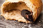 Mouse and bread Stock Photo - Royalty-Free, Artist: JanPietruszka                 , Code: 400-04136163