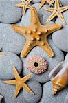 Nice background with starfish,seashells and a sea urchin