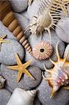 Nice background with seashells and starfish